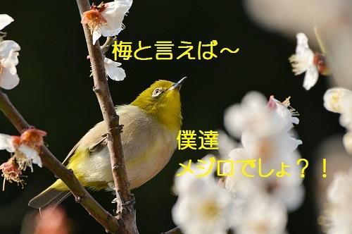 040_20170323180053191.jpg