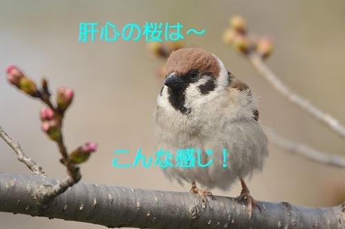 040_20170326193523a90.jpg