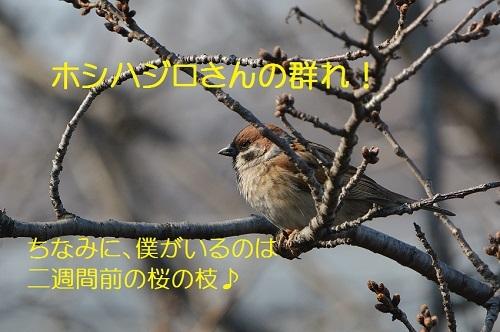 040_20170327181911fbc.jpg