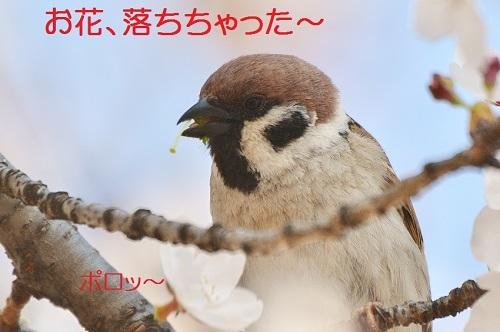 040_2017041319054989e.jpg