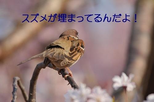 040_2017041720011810a.jpg