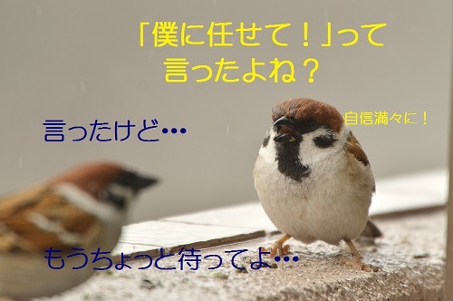 040_20170418191940612.jpg