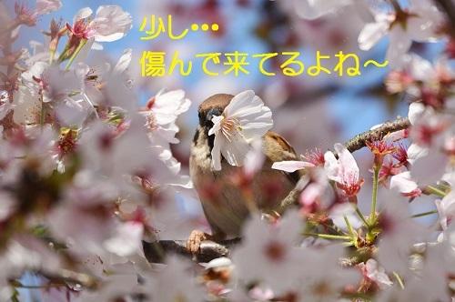 040_201704211932466b5.jpg
