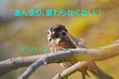040_20170425200229ed5.jpg