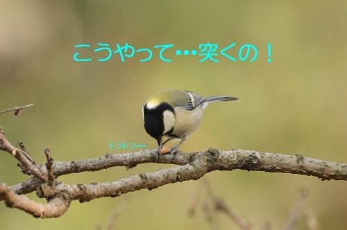 050_20170215184640e7b.jpg
