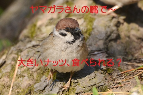 050_20170401193312799.jpg