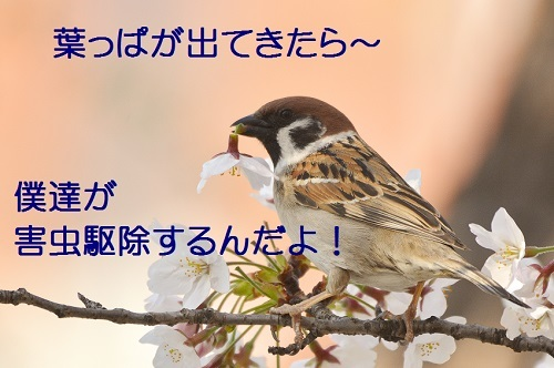 050_20170414183801c2d.jpg