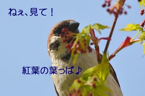 050_201704211932477f9.jpg