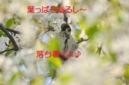 050_20170422202626e48.jpg
