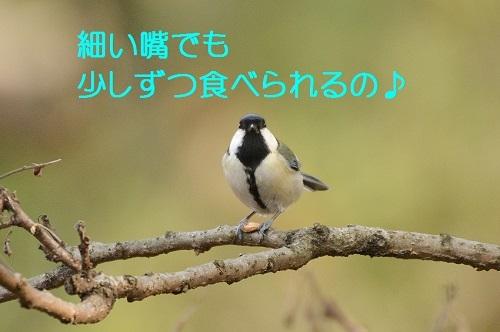 060_2017021518475014f.jpg
