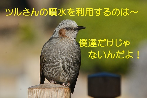 060_20170310184846dc9.jpg