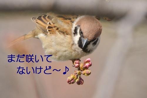 060_20170326193625336.jpg