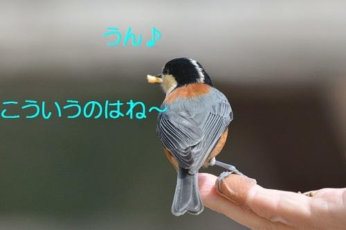 060_20170401193342f73.jpg