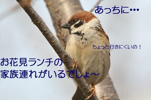 060_20170402202738a8b.jpg