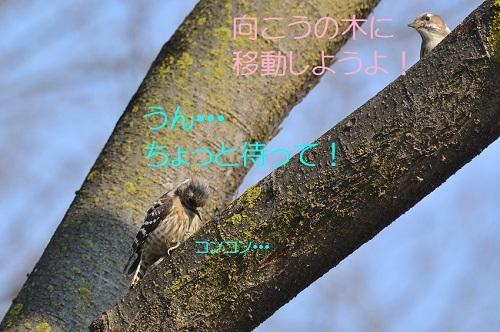 060_2017041119321322b.jpg