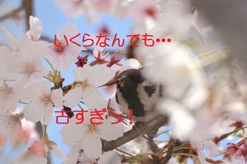 060_201704192123482e2.jpg