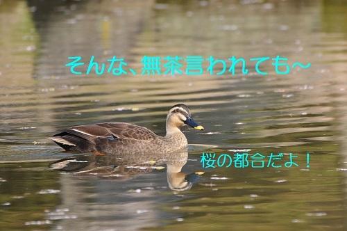 060_20170424190159003.jpg