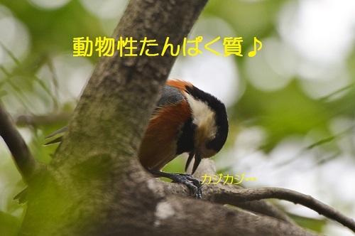 060_201704260137059f4.jpg
