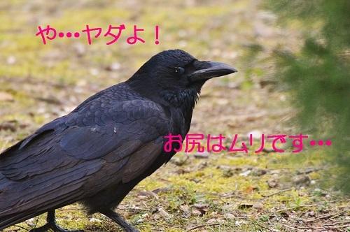 070_20170320231006a14.jpg