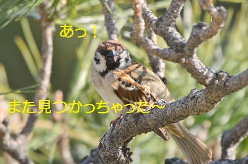 070_20170325215310fe5.jpg