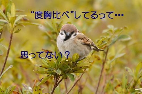 070_201704061906167e8.jpg