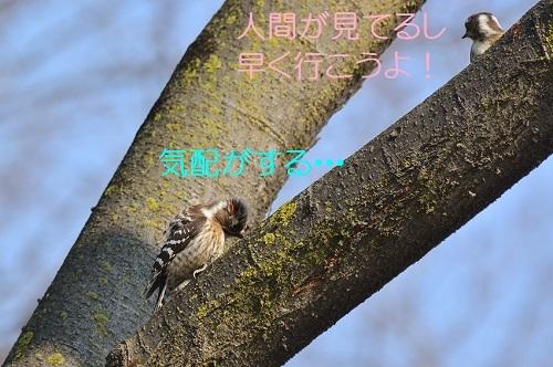 070_20170411193214019.jpg