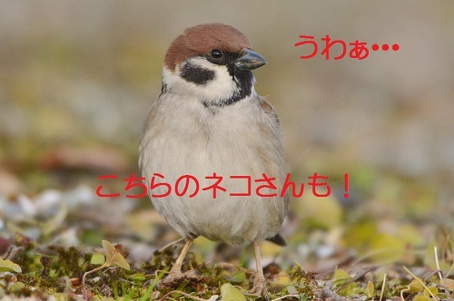 075_2017022118383183a.jpg