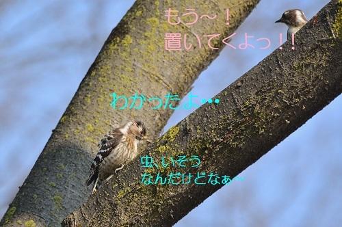 080_2017041119321640c.jpg