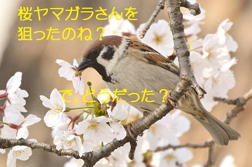 080_201704162115499d0.jpg