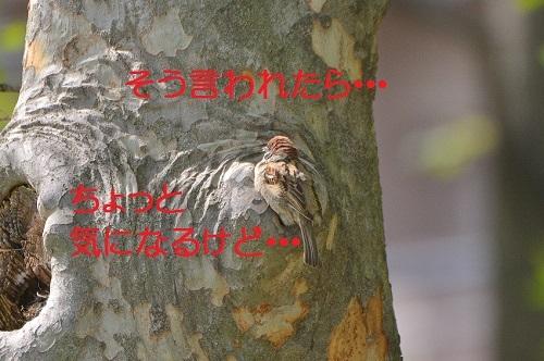 080_20170505194925c61.jpg