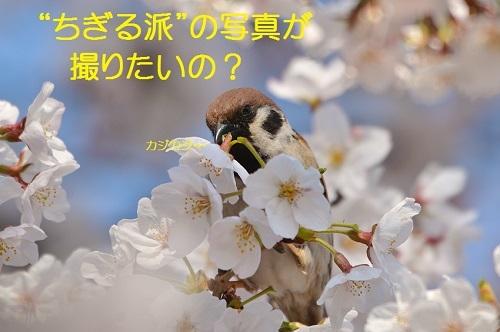 090_20170413190631bb3.jpg