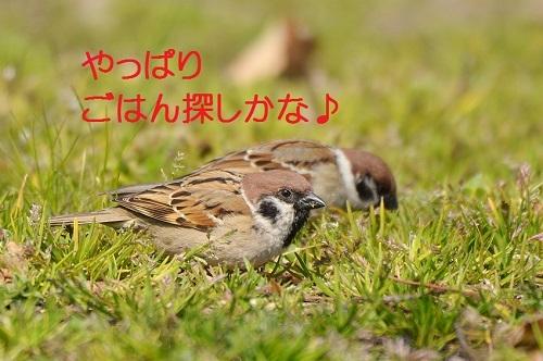 090_201704281900221de.jpg