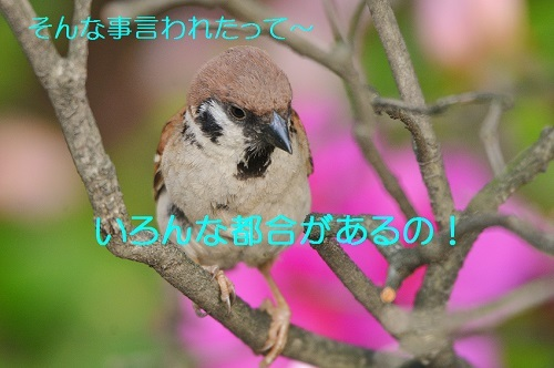 090_2017050721573679e.jpg
