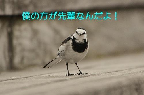 100_20170220191609cee.jpg