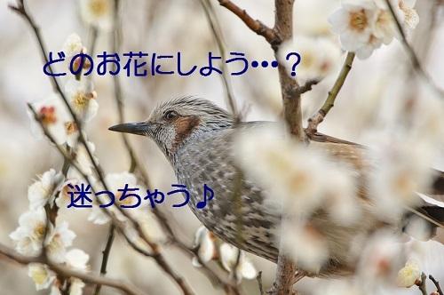 100_20170322191745b47.jpg