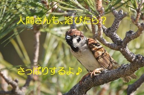 100_20170325215345d68.jpg