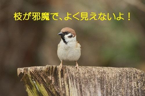 100_20170401193347f31.jpg