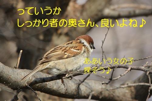 100_20170411193218d3d.jpg