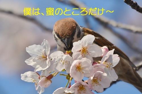 100_2017041219113257a.jpg