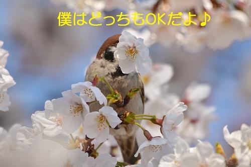 100_20170413190633d60.jpg