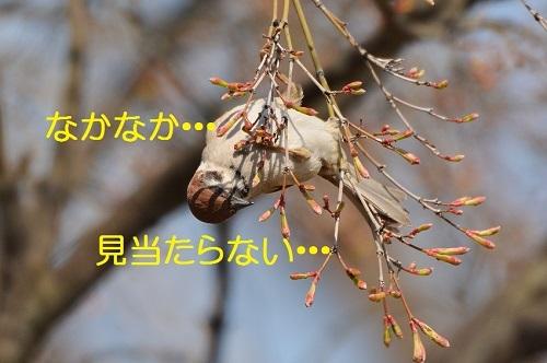 100_20170420191534c82.jpg