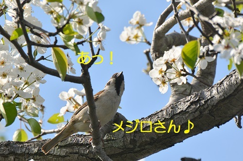 100_20170422202631ba7.jpg