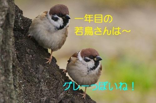 110_20170220191650abf.jpg
