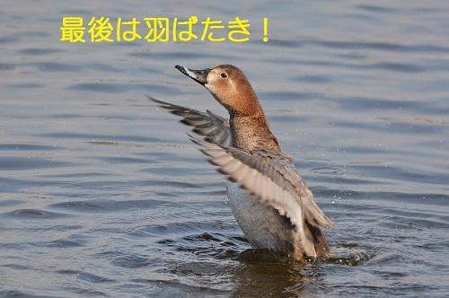 110_20170328194328335.jpg