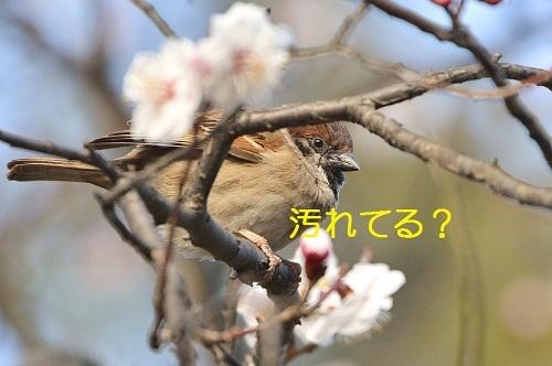 120_2017032419512321d.jpg