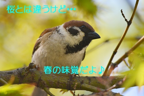 120_20170421193453f9c.jpg
