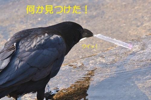120_20170424190237fcc.jpg