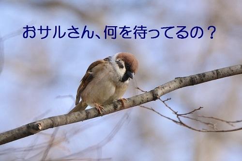 125_201703011905195c4.jpg