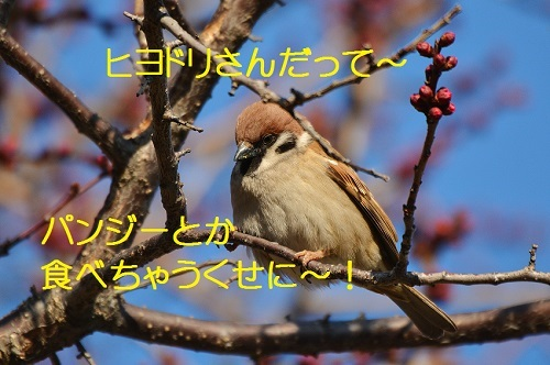 130_20170303185138368.jpg