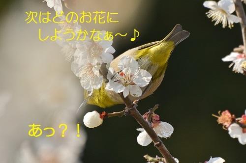 130_20170323181738199.jpg